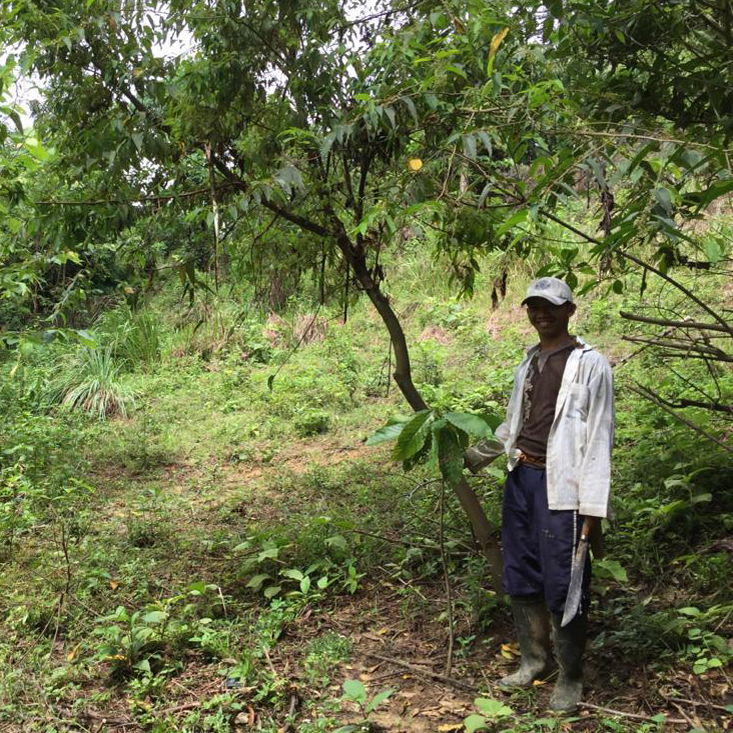 SOS UPDATE We have now funded the planting of 5,778 cocoa trees in Sumatra