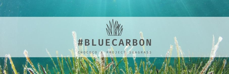Reduce carbon in the atmosphere with our Project Seagrass collaboration chocolates