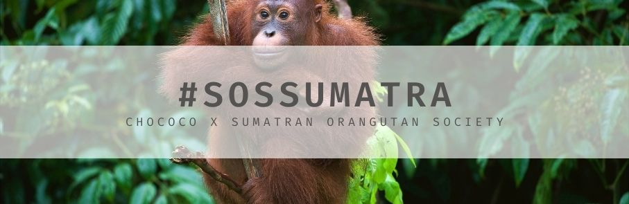 Help us reforest for Orangutans with SOS Sumatra