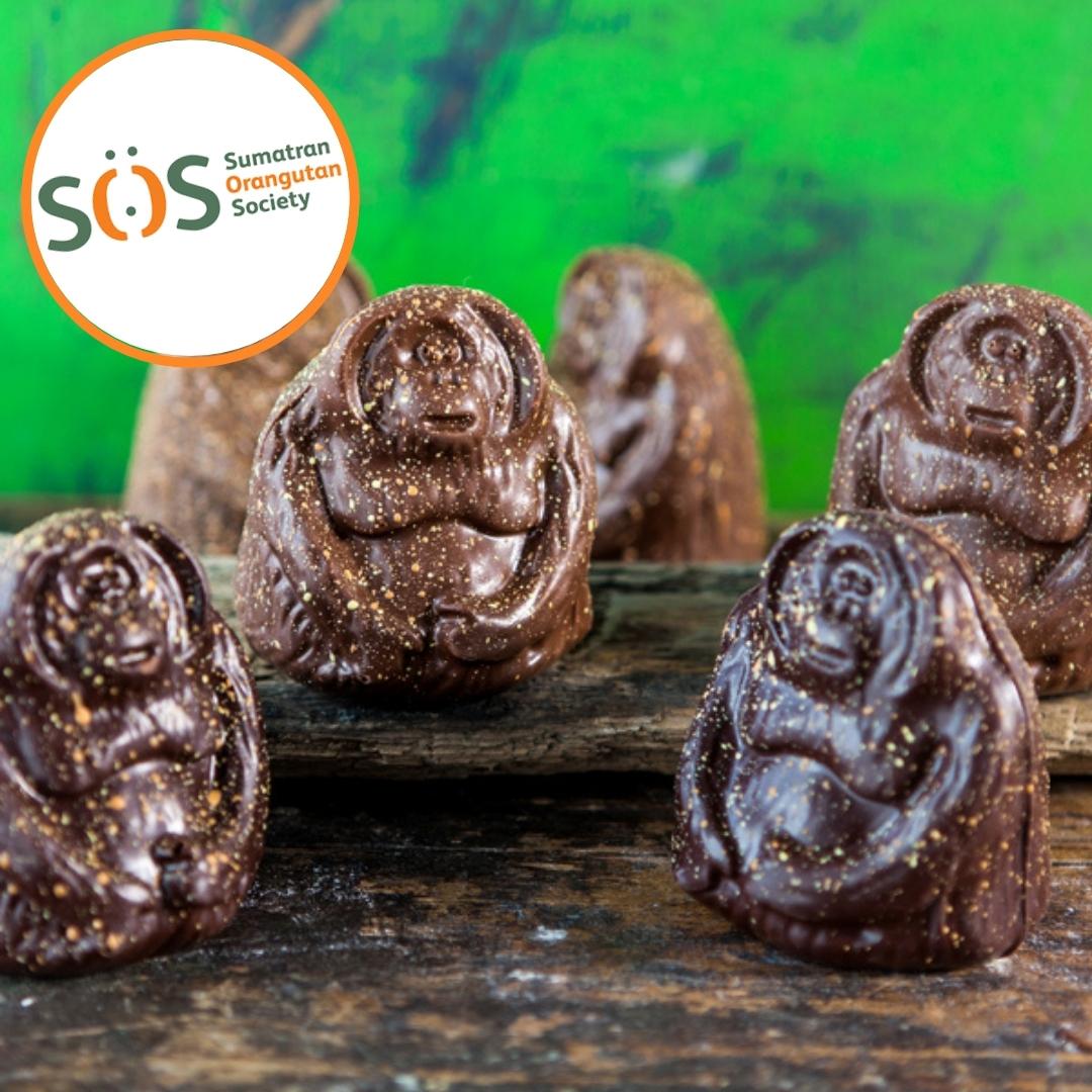 tuan and tuantoo chocolate orangutans